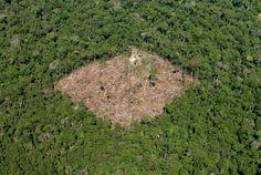União Europeia lidera consumo de bens ligados à destruição ilegal das florestas tropicais - PÚBLICO