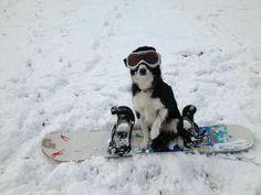 Go Snow Boarding in Colorado