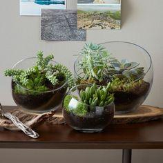 nachmachtipp sukkulenten terrarien vasen tischdeko pinterest terrarium sukkulenten. Black Bedroom Furniture Sets. Home Design Ideas