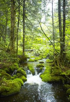 Mossy stream in Quebec forest  The green glow of moss highlights this stream running through the Parc de la Jacques-Cartier. (Mark Read)