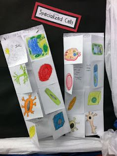 Science Foldables, Click on Read About it Here (1st Paragraph), the click on next link to take you to key PS math words foldable.  Four pages of key words for math log.  Excellent!!!