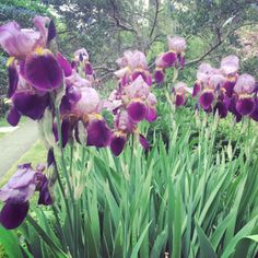 If your garden needs a pop of colour, flower farmer Sarah Nixon shares the best perennials to plant in Canada and how to care for them. Best Perennials, Flowers Perennials, Planting Flowers, Garden Insects, Garden Plants, Amazing Gardens, Beautiful Gardens, Flower Farmer, Iris Garden