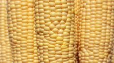 Why do so many people want to know if the food they are eating is genetically modified? Because of disturbing studies like this one, that showed genetically engineered corn damages the liver, kidneys, heart, spleen, and red blood cells.