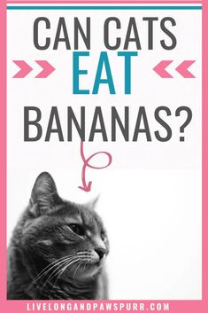 Can Cats Eat Bananas? - Live Long and Pawspurr Live Long, Cat Food, Bananas, Canning, This Or That Questions, Eat, Animals, Animales, Animaux
