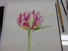My peony watercolour with Billy Showell