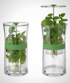 Make your herb of choice last way longer with this gadget.