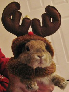 25 Of The Cutest Costumed Animals