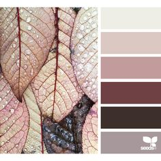 design seeds | search | for all who ♥ color ❤ liked on Polyvore featuring backgrounds, design seeds, colors, filler and seeds