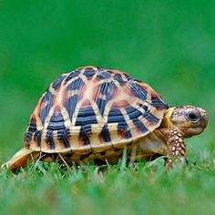 #Turtles make great #family #pets! Learn more: www.familycircle....