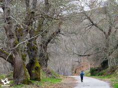 Etapa 22 Villafranca del Bierzo-O Cebreiro A las puertas del Os Ancares, Villafranca del Bierzo sirve como paso fronterizo del Camino entre el amplio valle del río Sil y las imponentes montañas que nos veremos obligados a ascender siguiendo los últimos pasos por tierras de León en su incansable discurrir hacia Galicia