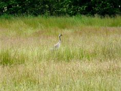Neulich habe ich mit Muddi eine nette Radtour gemacht. Unser Ziel war der Duvenstedter Brook. Ein Freund hat mir dieses Naturschutzgebiet empfohlen. Hier soll es Seeadler geben. Das wollten wir uns natürlich nicht entgehen lassen.