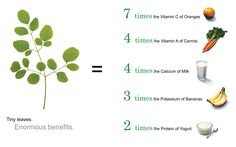 5 Miraculous Reasons To Have a Miracle Moringa Tree