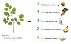 5 Miraculous Reasons To Have a Miracle Moringa Tree