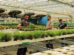 Передовые израильские агротехнологии