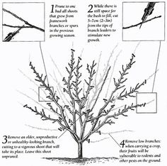 Landscaping Template as well Drawings Houseplant 3 Dwg Dxf 17 as well Plantings moreover Ornamental plants moreover Drawings Tree Cup 6 Dwg Dxf 71. on perennial flower garden design