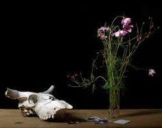 still life with skull term - Google meklēšana