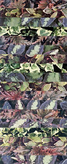 The Garden series Second Place 10x26cm © Luis Dourado.