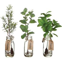 JARS :: DIY Herb Jars :: Use faux or real branches of rosemary, mint & basil (or any herbs really) & wrap twine w/ tags for a cute center piece or bedside table decor. | #jars #herbs