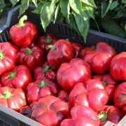 Super Greygo F1 paprika: Erős növekedésű, folytonnövő, paradicsom alakú hibrid paprika. A bogyó csüngő állású, nagy méretű, vastag húsú, zárt bibepontú, sötétzöldből pirosra érik. Szabadföldi termesztésre és hajtatásra is kiváló. Friss fogyasztásra és ipari feldolgozásra egyaránt ajánlott. Vegetables, Food, Red Peppers, Essen, Vegetable Recipes, Meals, Yemek, Veggies, Eten