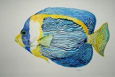 Scribbled Angelfish watercolor por somosomo en Etsy