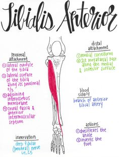 Erase Foot and Ankle Pain with 8 Easy Exercises · MoveFitDoc Yoga Anatomy, Human Body Anatomy, Human Anatomy And Physiology, Muscle Anatomy, Anatomy Study, Anatomy Art, Massage Therapy School, Physical Therapy School, Muscular System Anatomy