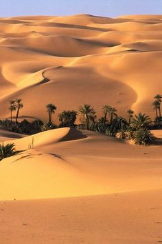 OASIS EN EL DESIERTO DEL SAHARA