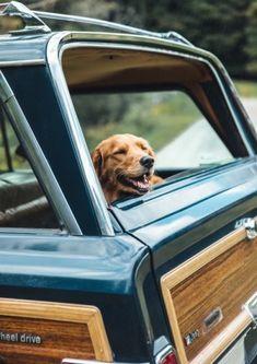 Aasia Rajput — Desi hot beautiful selfie girl More:. Vintage Jeep, Jeep Wagoneer, Jeep Grand, Jeep Life, Dog Days, Puppy Love, New England, Labrador Retriever, Cute Animals