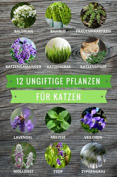 Plantas no tóxicas para gatos: estas especies incluso se pueden comer - Katzenwissen Toxic Plants For Cats, Cat Plants, Garden Plants, Planting Plants, Cat Garden, Types Of Animals, Animals And Pets, Crazy Cat Lady, Crazy Cats