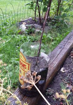 How To Grow Trees From Twigs - its a simple method you can use to turn cuttings from fruit trees into new trees... #gardening #homesteading