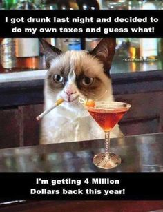 Grumpy cat...taxes...drinking...Funny Pictures Of The Day – 33 Pics