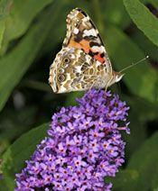 Komule Green Grass, Dragonflies, Butterfly, Flowers, Dragon Flies, Florals, Bowties, Flower, Blossoms