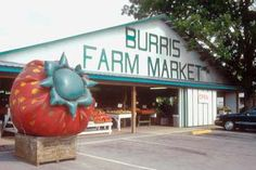 Burris Farm Market Loxley, AL on HWY 59: I have to stop by this place every time I take a trip to Lower Alabama