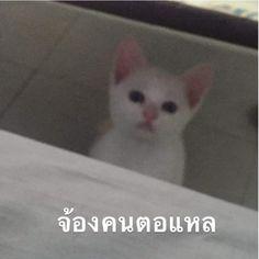 Cute Animal Memes, Cute Animals, Cute Lockscreens, Funny Mems, Baby Cats, Funny Faces, Best Memes, Funny Moments, Haha