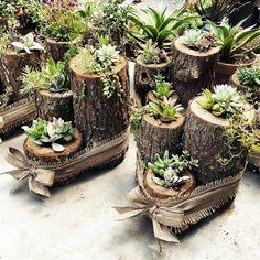 Vertical Succulent Gardens, Succulent Landscaping, Succulent Terrarium, Yard Landscaping, Succulent Gifts, Succulent Ideas, Succulent Wedding Centerpieces, Wedding Plants, Garden Wedding