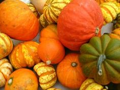 Growing Winter Squash In Your Garden