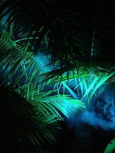 plants & smoke