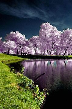 Would love to be sitting and relaxing here! Beauty of nature. Would love to be sitting and relaxing here! Beauty of nature. Beautiful World, Beautiful Places, Beautiful Pictures, Landscape Photography, Nature Photography, Photography Women, Photo D Art, Jolie Photo, Nature Pictures