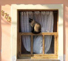 Gato na janela