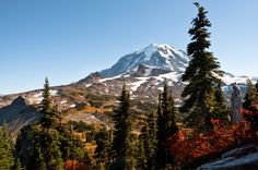 At more than 14,000 feet tall, Mount Rainier in stands as an icon in the Washington landscape. Capped with glaciers, the peak is always a stunning white while the wildflower meadows and forests that...