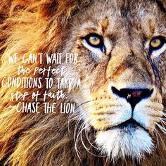 Warrior Princess, Lion, Take That, Animals, Glove, Leo, Animales, Animaux, Lions