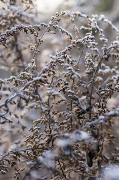 Photography by Ari Weinkle How To Make Snow, Winter Beauty, Winter Garden, Dog Walking, Winter Christmas, Winter Wonderland, Herbalism, Nature, Photography