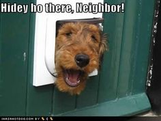 Funny Dog Pictures - Airedale Terrier