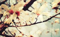 Arbre à fleur #nature #flowers #garden #amazing #beauty #love #like