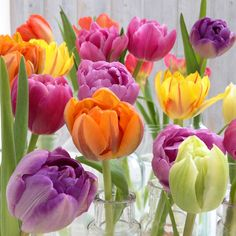 It's Day 6 of Tulip Week and I'm featuring some inspirational images on how to style your tulips and using them in your home. Go to my blog for the full story. See profile for link. Have a fabulous floral Saturday! xoxo
