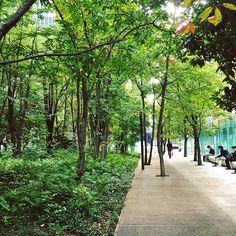 【megumi_tsai】さんのInstagramをピンしています。 《 #東京駅#東京車站#大手町#大手町タワー#大手町の森#都市叢林#森#みどり#綠意盎然#午後半休#下午請了半天假#代休消化#ストレス発散#圈外模式#逃避現實中》