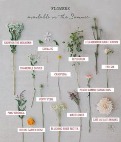 Green Wedding Shoes Summer flower guide