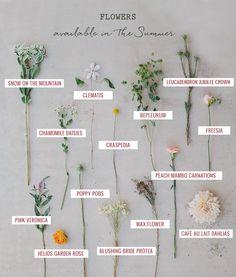 SEASONAL FLOWER GUIDE: SUMMER