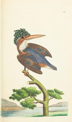 v.1 - The naturalist's miscellany, or Coloured figures of natural objects - Biodiversity Heritage Library