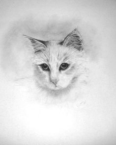 Pencil Drawing of Long haired Cat by LittleSilverFingers on Etsy, £35.00