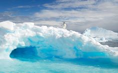 A penguin stands on an ice formation above a pool of meltwater in Antarctica - I felt kind of like this today.